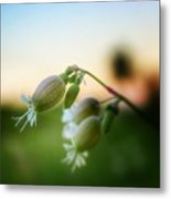 Local Wildflower Metal Print