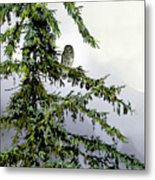 Lofty Perch Metal Print