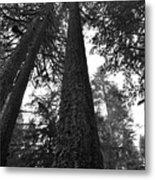 Lofty Tree Metal Print