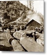 Logging With Oxen At A Saw Mill Sonoma County California Circa 1900 Metal Print