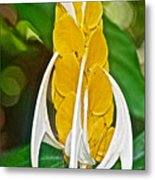 Lollipop Flower In Bourbon Resort Gardens Near Iguazu Falls National Park-brazil  Metal Print