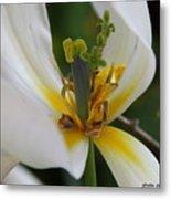 London White Tulip Metal Print