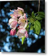 Lone Cherry Blossoms Metal Print