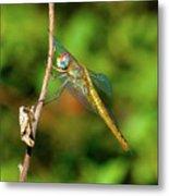 Lone Dragonfly Metal Print