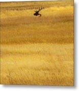 Lone Elk In Field Metal Print