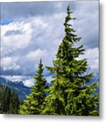Lone Fir With Clouds Metal Print