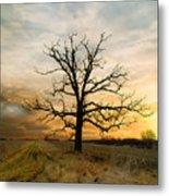 Lone Oak On The Marsh Metal Print
