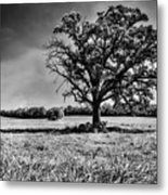 Lone Oak Tree In Black And White Metal Print