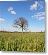 Lone Oak Tree In Wheat Field Metal Print