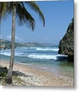Lone Palm On Barbados Coast Metal Print