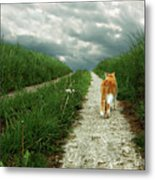 Lone Red And White Cat Walking Along Grassy Path Metal Print