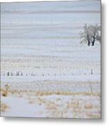 Lone Reflection Metal Print