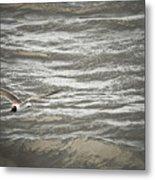 Lone Sea Gull Metal Print