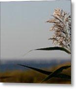 Lone Seagrass Metal Print