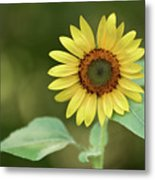 Lone Sunflower Metal Print