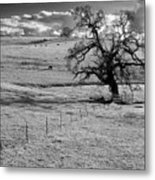 Lone Tree And Cows 2 Metal Print