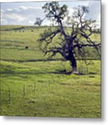 Lone Tree And Cows Metal Print