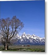 Lone Tree At Tetons Metal Print