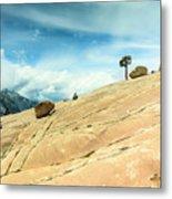 Lone Tree At Yosemite Metal Print