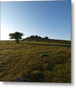 Lone Tree, Dartmoor Metal Print
