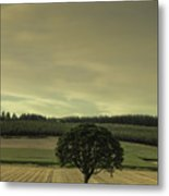 Lone Tree In The Field Metal Print