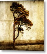 Lone Tree Metal Print by Julie Hamilton