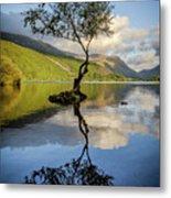 Lone Tree, Llyn Padarn Metal Print