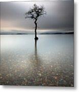 Lone Tree Loch Lomond Metal Print