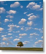 Lone Tree Morning Metal Print