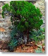 Lone Tree On A Cliff Metal Print