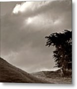 Lone Tree On A New Zealand Hillside Metal Print