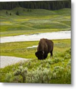 Lonely Bison Valley Metal Print