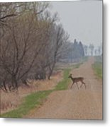 Lonely Deer Crossing Metal Print