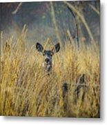 Lonely Deer In The Field Metal Print