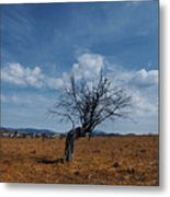 Lonely Dry Tree In A Field Metal Print