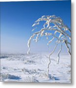 Lonely Frost  Metal Print