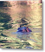 Lonely Hippo Metal Print