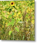 Lonely In The Wild Metal Print