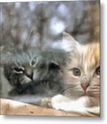Lonely Kittens Behind The Glass Metal Print