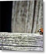 Lonely Ladybug Metal Print