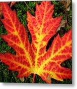 Lonely Leaf ... Metal Print