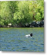 Lonely Loon Taking The Red Eye Metal Print