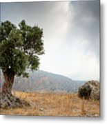 Lonely Olive Tree And Stormy Cloudy Sky Metal Print