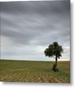 Lonely Olive Tree With Moving Clouds Metal Print