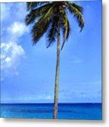 Lonely Palm Tree Los Tubos Beach Metal Print