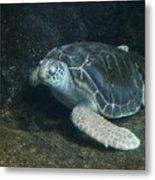 Lonely Sea Turtle Metal Print