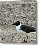 Lonely Seagull Metal Print