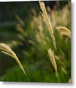 Lonely Spikes Metal Print