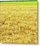 Lonely Tree And Stubble Filed Metal Print