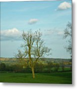Lonely Tree Cotswold England Metal Print